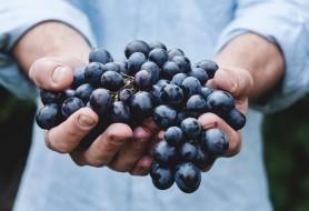 Cursus druiven en herkomst